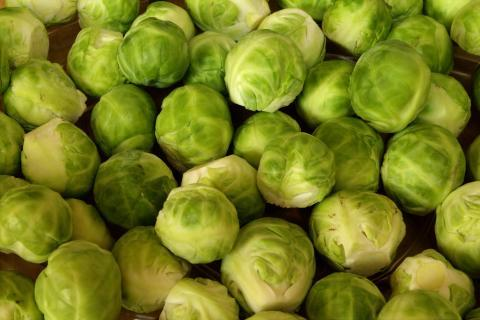 "The sprout. The Dutch for ""the sprout"" is ""de spruit""."