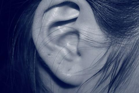 "Ear. The French for ""ear"" is ""oreille""."