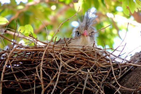 "Bird's nest. The Thai for ""bird's nest"" is ""รังนก""."